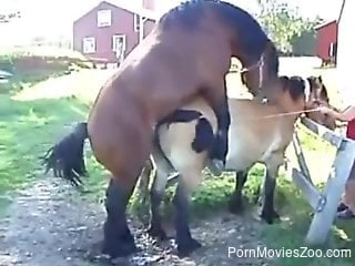 Spicy horse never misses a chance for a good sex