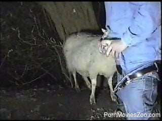 Lustful sheep is giving this guy a fantastic blowjob