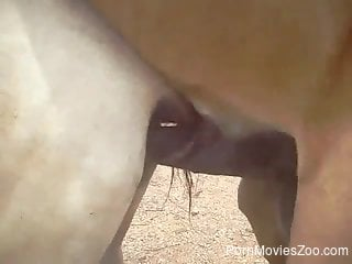 Close-up scene of hot horse sex and its huge dong