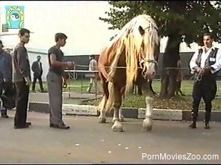 Horny stallion is having an erection on the street
