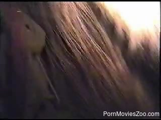 Remarkable close-up of a zoophilic anal sex action