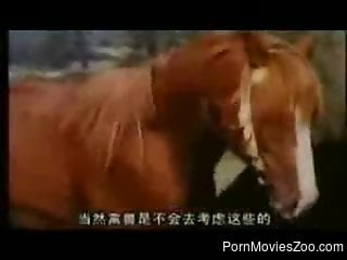 Amazing horse sex video featuring remarkable stallion