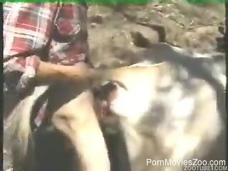 Cow licks man's penis and suits his sexual desires just fine