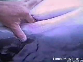 Horny man finger fucks dolphin in kinky outdoor tryout