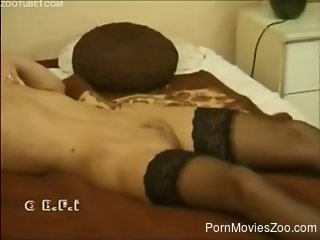 Stockings-clad babe gets fucked by a kinky animal
