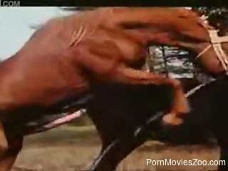 Muscular stallion fucking a mare's wet cunt from behind