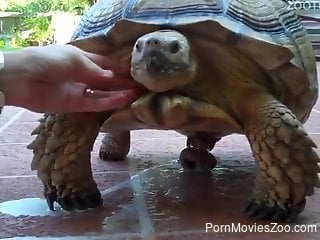 Mature lady watches a kinky turtle cum on camera